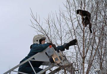 Спасение животных с деревьев